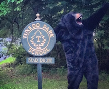 bear shot